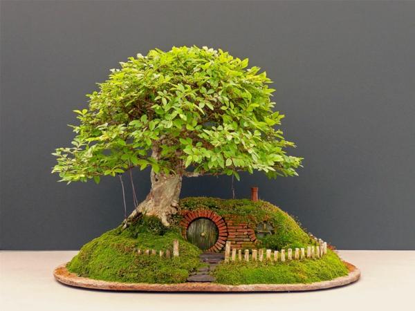 arbre banzai