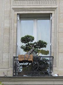 bonsai d intérieur