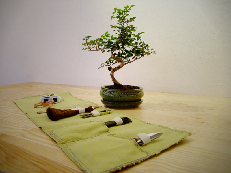 bonsai jardiland