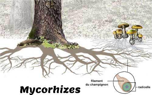 bonsai plante entretien