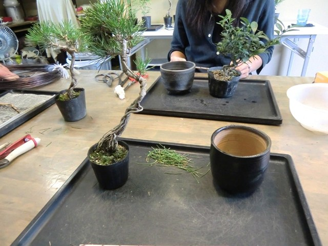 grand pot pour bonsai
