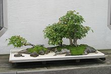 pot bonsai