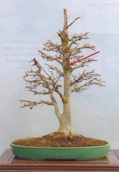 substrat bonsai