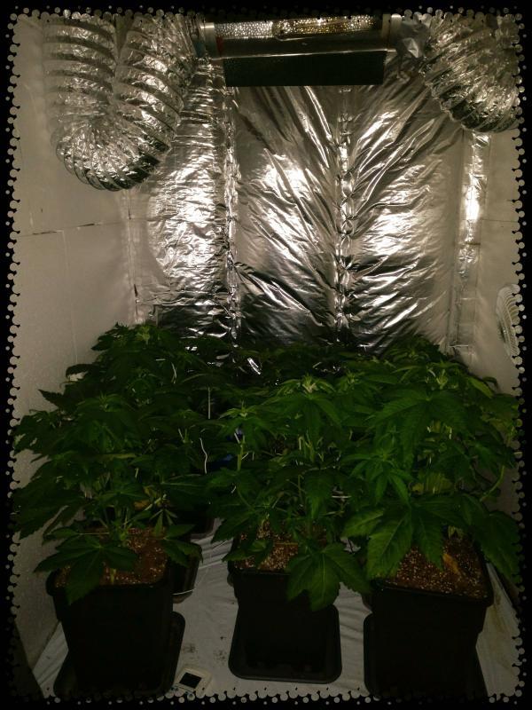 lampes pour plantes