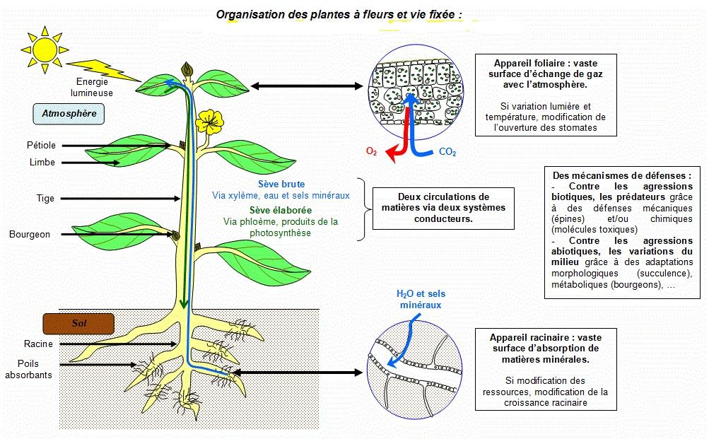 lumiere pour plante