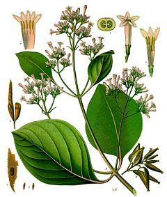 plante interieur rouge