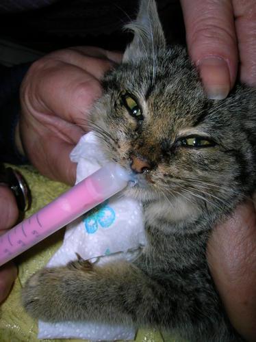 bébé chaton a donner