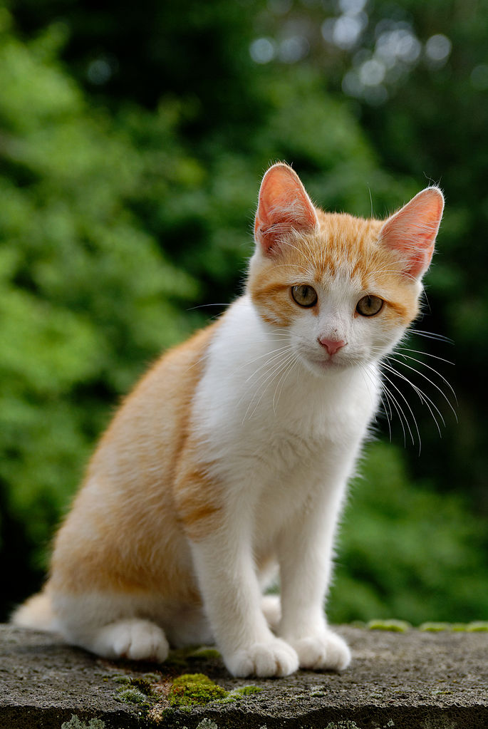chaton a donner 57