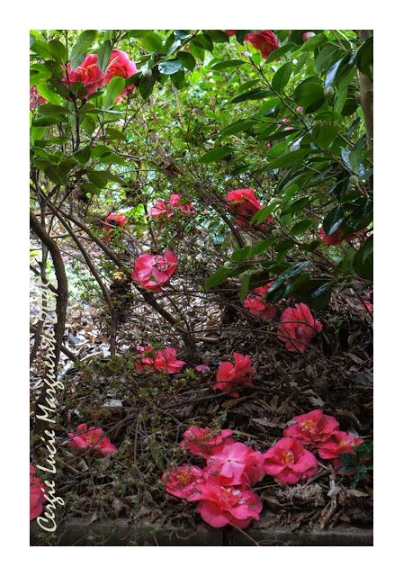engrais floraison maison