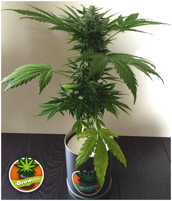 lampe croissance plante