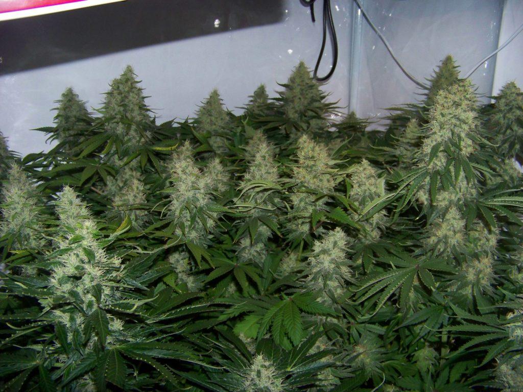 led croissance plante