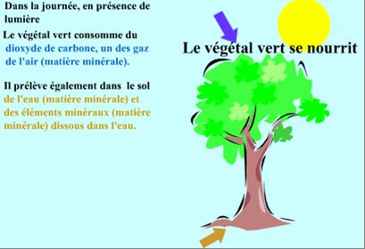 lumière pour plantes vertes