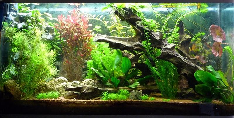 eclairage artificiel pour plantes