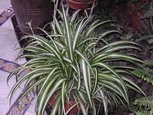 plante a fleur d'intérieur