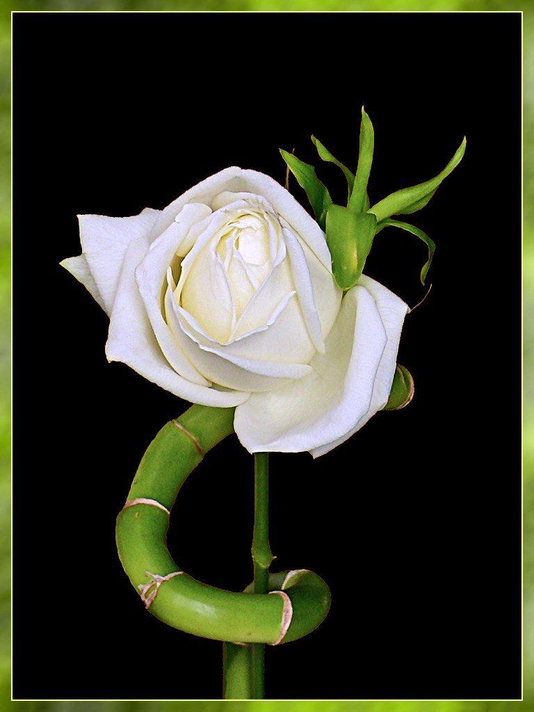 plante d'intérieur a fleur rose