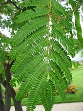 plante feuille rouge et verte