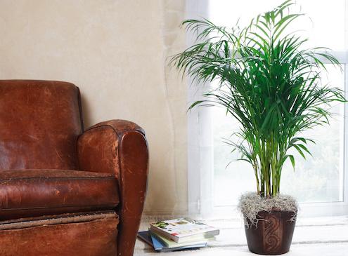 plantes d'intérieur dépolluantes