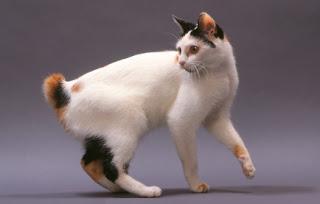 chat porte bonheur japon