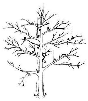 dessin arbre de vie gratuit a imprimer
