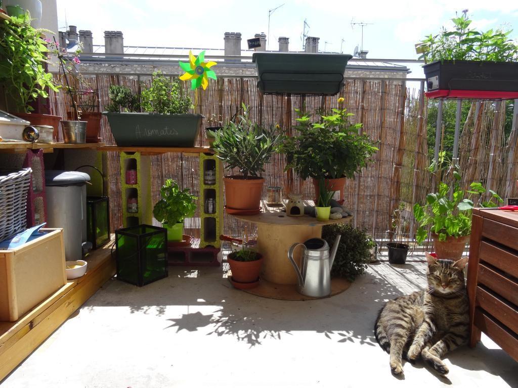 jardin japonais extérieur