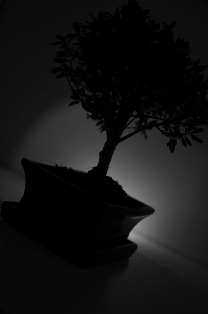 matériel pour bonsai