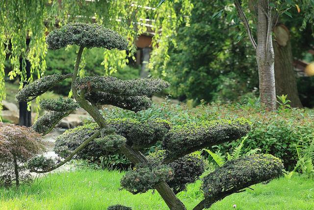 outils bonsai japonais