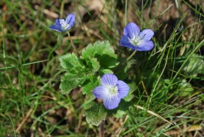plante fleur intérieur