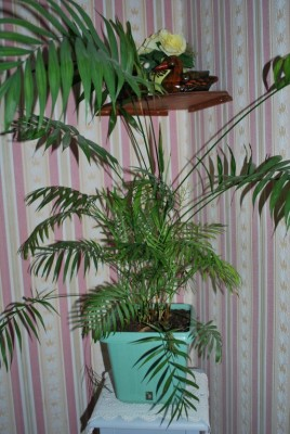 toutes les plantes vertes d'intérieur