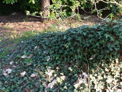 pierre pour décoration jardin
