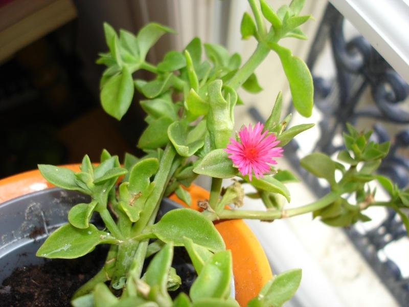 plantes vertes a fleurs rouges