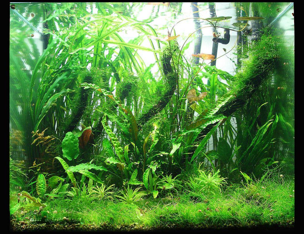 akadama aquarium