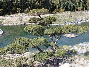 decor de jardin japonais