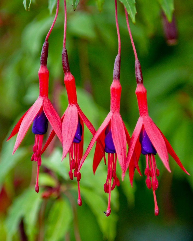 plante de jardin