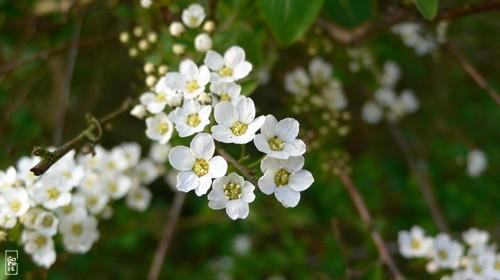 fleur plante et jardin
